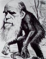 20080411110107-darwin-ape.jpg