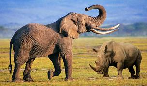 20131207164532-elefantes-rinocerontes-1-.png