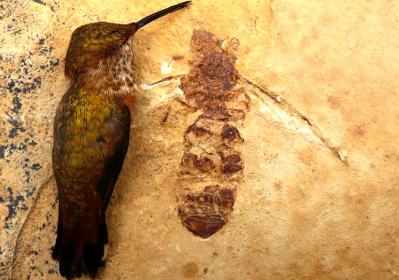 20140610180157-biologia-fosil.jpg