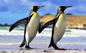 20160314155749-pinguino.jpg