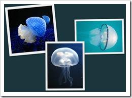 20091221132447-medusas-4-.jpg