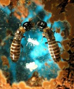 20091222192621-termita.jpg