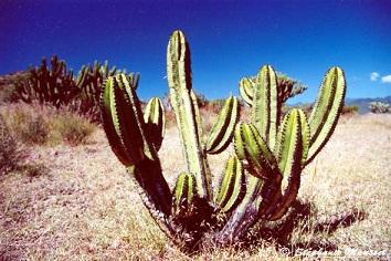 20111110125911-20111012234842-cactus1.jpg