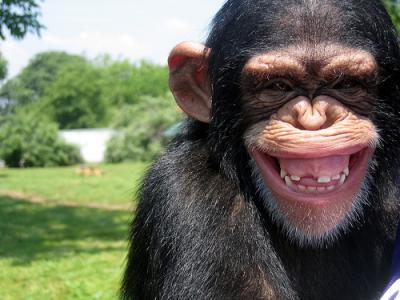 20120227205358-chimpance.jpg