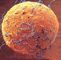 20121105193028-imagen-celula-madre-biologia.jpg