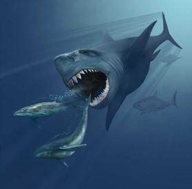 Encuentran en Canarias fósiles de megalodón, el tiburón más grande de la historia