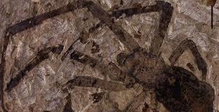 Encontrado en China el fósil de araña más grande hallado hasta el momento
