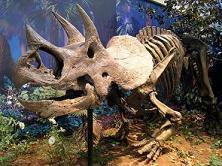El fósil del dinosaurio más reciente.