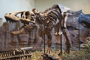 Historia y fósil del Tyrannosaurus rex